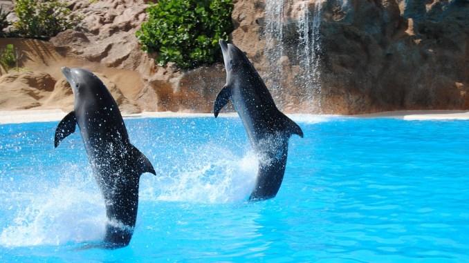 salzwasserdelfine