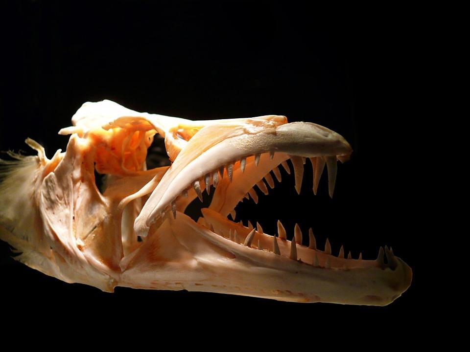 Fische Anatomie: Physiologie, Wahrnehmung und Kommunikation