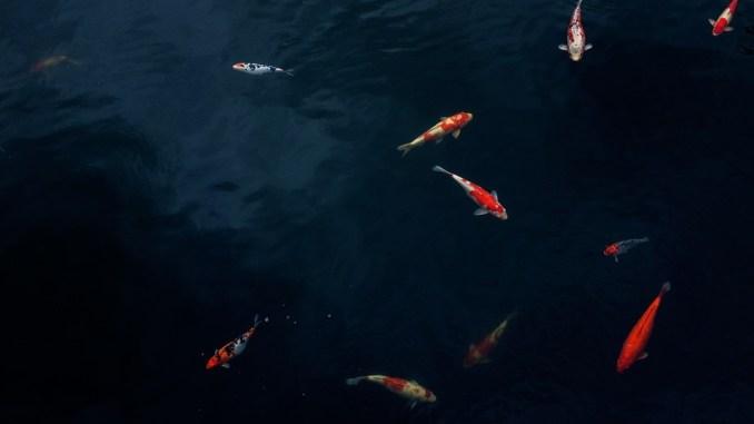 fische-natur