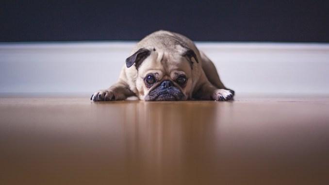 hund-wohnung-verhalten-deuten