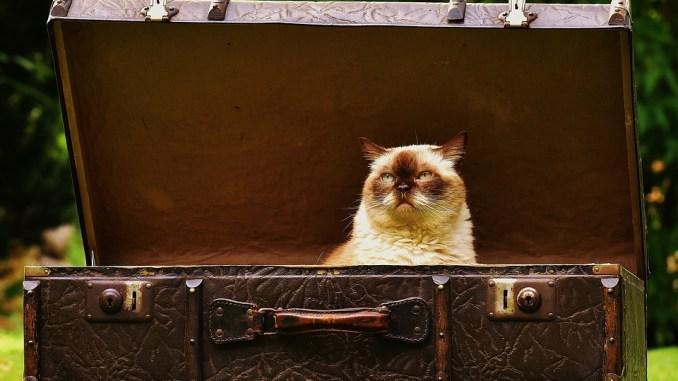 katze-transportbox-unterwegs-koffer