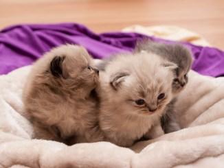 katzenbabies-katzenaufzucht