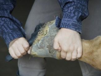 pferdekrankenversicherung-hufe-putzen