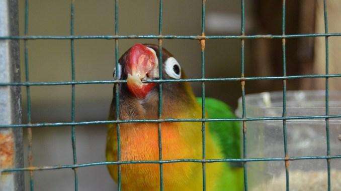 vogel-hasutier