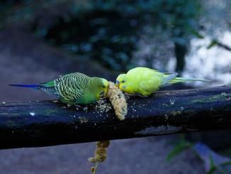 vogelkauf