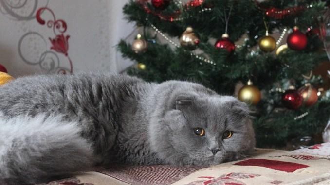 weihnachtsbaum-bkh-katze