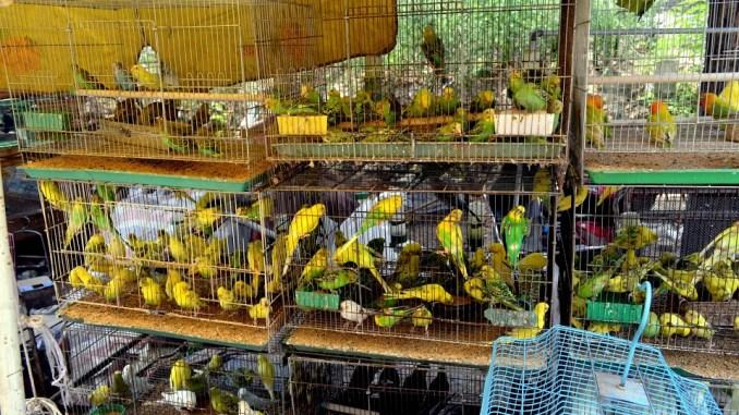 Vogelkäfige als Vorbereitung für Vogelveranstaltungen