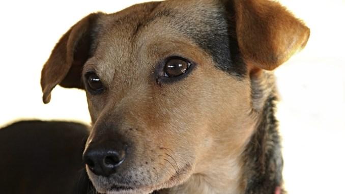 Ohrenreiniger Fur Hunde Tiere Online De