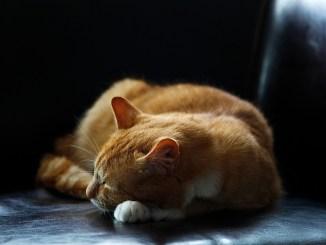 katzenurin-neutralisieren-bild-cat