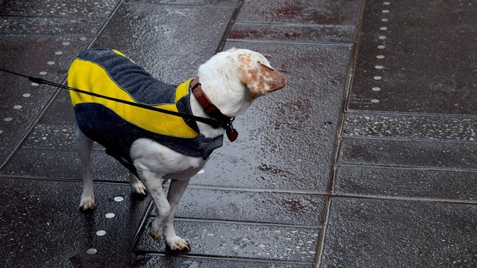 leinenpflicht-in-hamburg-hund