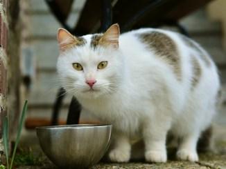 Was essen Katzen? Fragen über Katzennahrung beantwortet