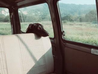 hund-aengstlich-reisetabletten-hunde