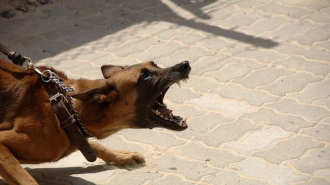 Hundeabwehr Mittel Gegen Hunde Zur Abwehr Tiere Onlinede