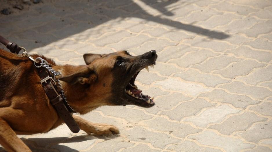 Berühmt Hundeabwehr – Mittel gegen Hunde zur Abwehr » Tiere-online.de @XV_35