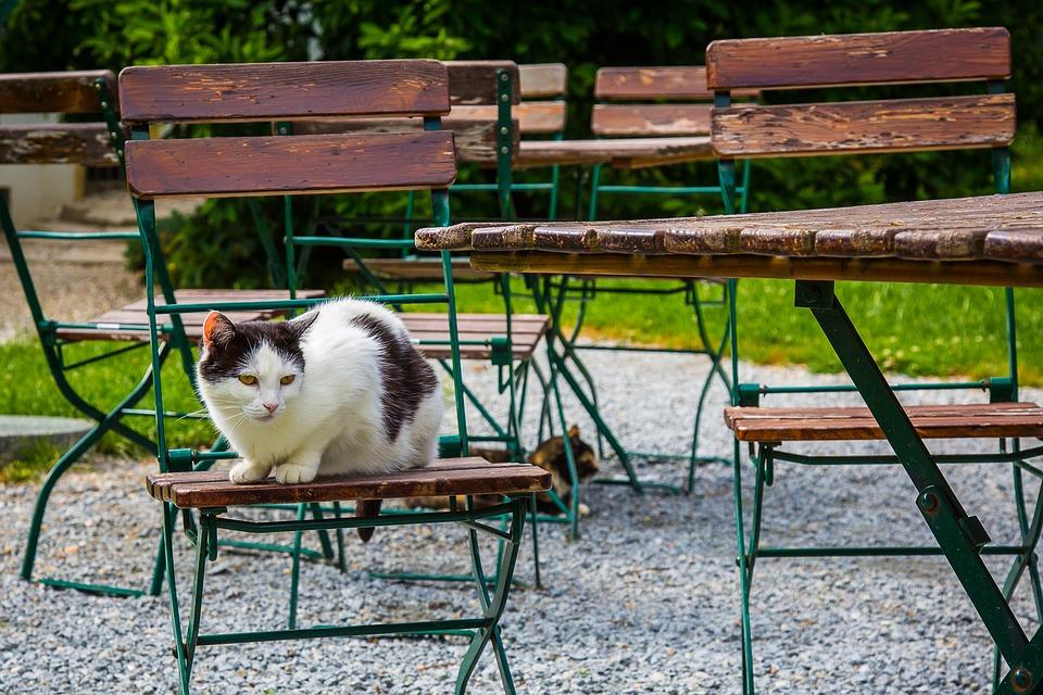 Katzenabwehr Mittel Gegen Katzen Zur Abwehr Tiere Onlinede
