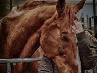 wo-kann-man-pferd-kauf