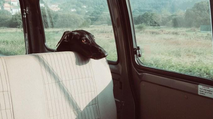 hund-koffer-raum