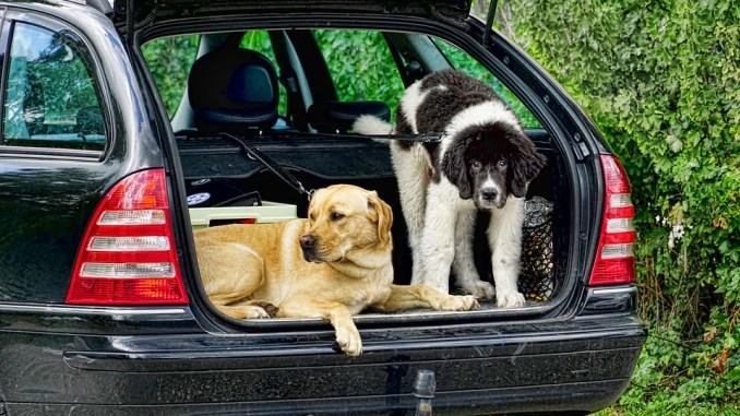 hund-kofferraum