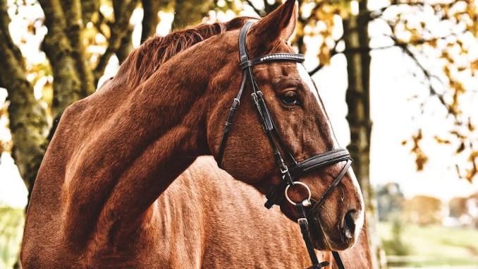 pferd-ernaehrung