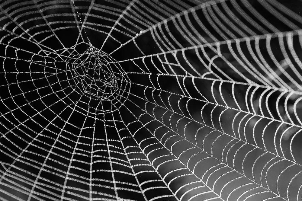 Panische Angst Vor Spinnen