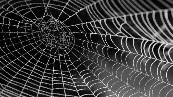 spinnennetz-angst