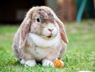 hase-stall-kaninchen