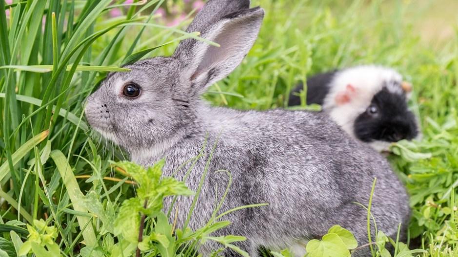 Top Kaninchenfutter – Was dürfen Hasen essen? @HN_99