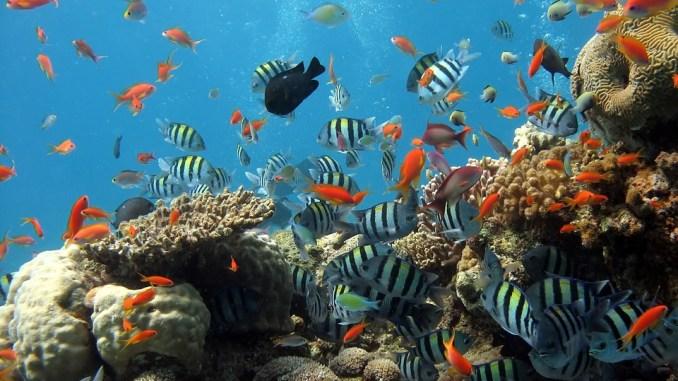 aquarium-fuer-anfaenger