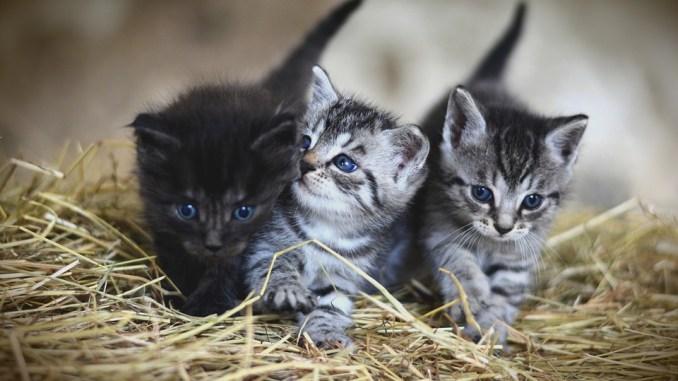 Wieviel Leben hat eine Katze?