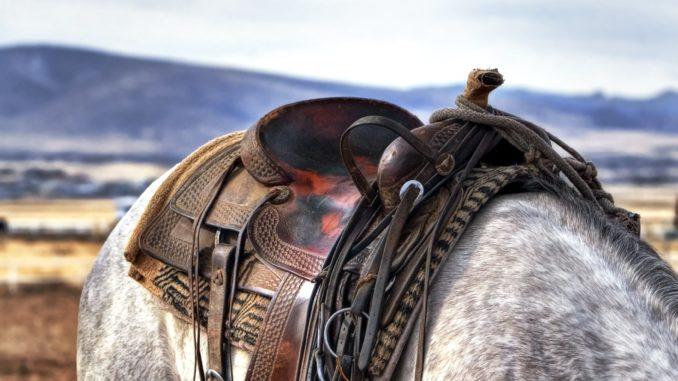 Pferdekosten-monatlich-einsparen
