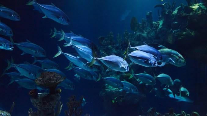 aquarium-mittelgroß
