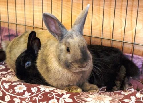 Annabelle (schwarz) und Charly (grau-beige)