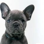 Welcher Typ Hund ist dein Hund (Alle vier Typen) (2/4)