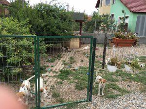 Tierschutzvererin ASIPA Garten