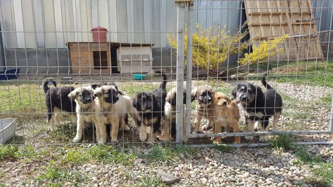 Tierpatenschaft
