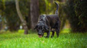 Hundebub Arlo