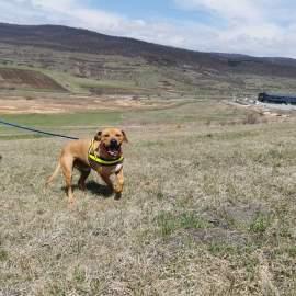 Tolle Aktion bei ASIPA – Mit Hunden spazieren gehen