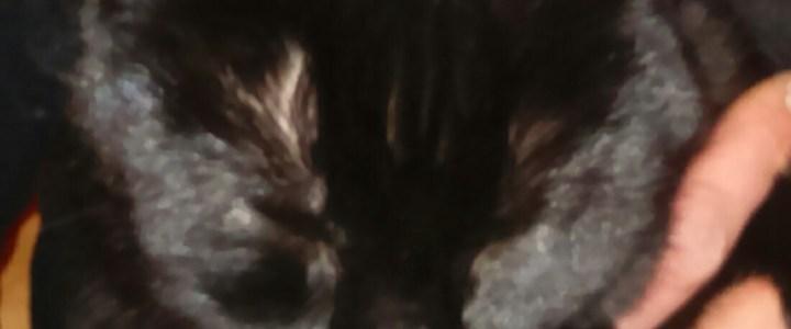 Katze Elfie wird gesucht