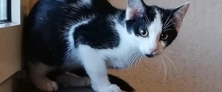 Hallo liebe Tierfreunde,  mein Name ist Kira und ich bin sehr traurig.