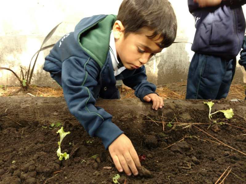 Huerta Nivel Inicial Colegio Tierra del Sur