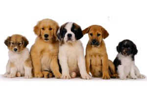 Aceite de coco para perros