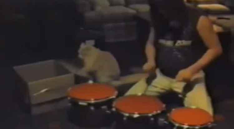 Gato baterista