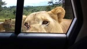 León abrió la puerta de su auto