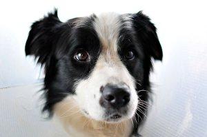 Nadie puede creer como se salvó este perro