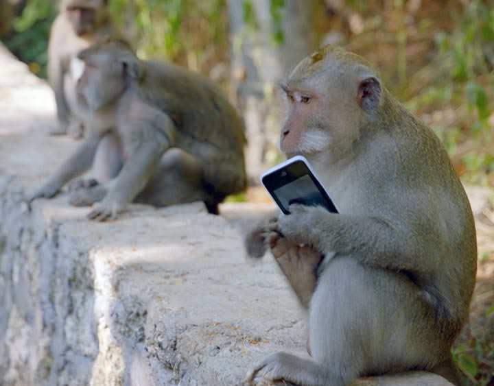 Monos roban cosas de la gente para luego cambiarlas