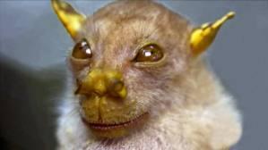 Murciélagos con caras de felicidad