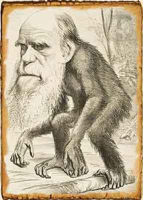 Caricatura de Darwin en la revista Hornet