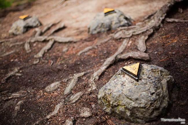 marcadores de posición bosque encantado