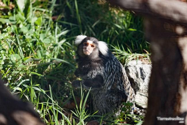 pequeno primate qué hacer en el valle de carranza