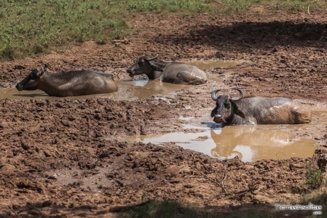 safari yala tissamaharama